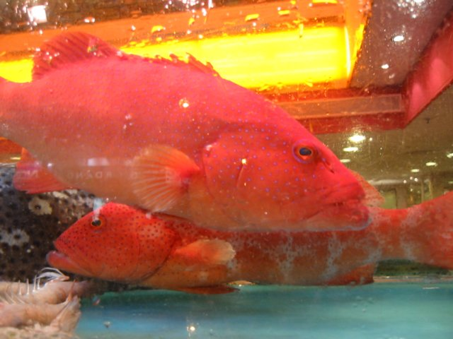 Red fish in the window of a restaurant for Red fish catering